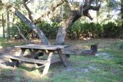 Picnic table and fire pit/grill in front of a sprawling oak tree with hanging moss.