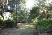 View from rear of site facing the woods saw palmetto on right and left sides, two small oak trees in the middle.