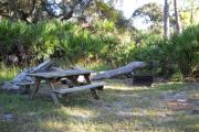 Picnic table and fire pit / grill in front of large fallen oak and saw palmettos.