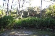 View from rear of site facing the woods that includes large saw palmettos.