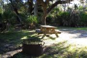 Picnic table and fire pit/grill with saw palmetto and large sprawling oak tree with hanging moss in back of table and grill.