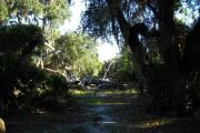 View is from rear of site facing the woods including a path way through the oaks and palmettos to a large fallen oak tree.