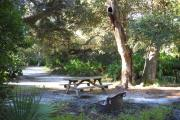 Picnic table and fire pit/grill in front. Medium size oak tree and saw palmetto behind the table.