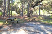 Picnic table on left in front of several pine trees, fire grill/pit in middle of picture in front of large oak tree.