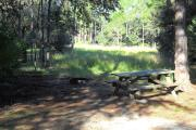 Picnic table on right side in front of pine tree. Fire grill on left in front of marsh land grasses.