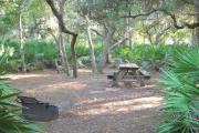 Fire pit on right by palmettos. Picnic table on left behind palmetto and in front of small oak trees.