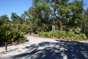 Photo is looking at LOOP 1 #2, a different view of the entrance to the site.  Palmetto and trees surround the site.