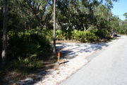 Looking at LOOP 1 #6 from camping area road – Partially shaded site surrounded by palmettos and green trees;