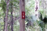 Campsite signpost for site #19 with typical surrounding oak, pine, and palm vegetation in background.