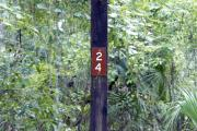 Campsite signpost for site #24 with typical surrounding oak, pine, and palm vegetation in background.