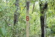 Campsite signpost for site #26 with typical surrounding oak, pine, and palm vegetation in background.