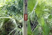 Campsite signpost for site #27 with typical surrounding oak, pine, and palm vegetation in background.
