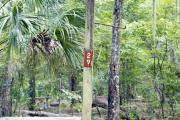 Campsite signpost for site #29 with typical surrounding oak, pine, and palm vegetation in background.