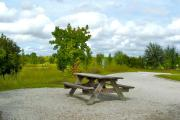 A wooden picnic table in the foreground with some trees and low growing vegetation around the site.