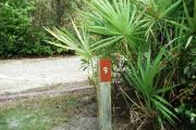 The site marker for campsite number 9 shows the palmetto shrubs and other low growing shrubs in the foreground with smaller to medium sized trees in the background. Site number 9 is a 48 foot, back in, site and is partially shaded throughout the day.
