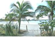 Photo: OLETA RIVER SP. Palm trees frame the photo of Biscayne Bay and high rise buildings in the distance.