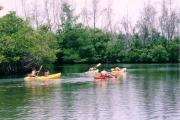 Photo: OLETA RIVER SP. Five people paddle yellow and red kayaks on the Oleta River.
