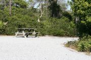 Picnic table in pull through site surrounded by vegetation.