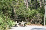Picnic table and fire ring in campsite.