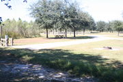 Looking from the back of campsite #10 - Ground is scattered with green and brown grass, partial shade is provided by small oak trees.  Far left is electric hookup and water spigot, surrounded by a protective wooden enclosure.  Center of picture is the picnic table and on the far right is the circular ground grill.