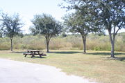 Looking at campsite #28 from opposite side of road – Ground cover is green and brown grass.  Small oak trees providing sparse shade near the back of site.  On the left side of the photo are a picnic table and a circular ground grill.