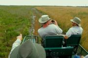 The tour guide driving the prairie buggy points out the different responses of plants in relation to recent fires. A trail splits the prairie. The prairie on the right produced a wheat field-like appearance of wiregrass because of growing season fire. A metal trail marker is at the bottom left.