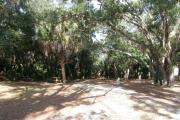 Oak branches provide partial shade over the campsite. Cabbage palms, pine trees, and oak trees line the rear of the campsite.