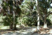 The vehicle pad and entrance for campsite 9 is narrow due to the close spacing of the cabbage palm trees on the site.