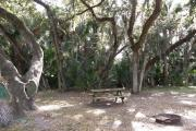 Large oak trees stretch out above the picnic table. Cabbage palms and large oaks provide a wilderness setting.