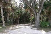 Campsite 29 has a narrow vehicle pad due to the numerous cabbage palms and oaks in the site.