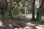 Numerous cabbage palms erupt around the shaded picnic table and fire ring.